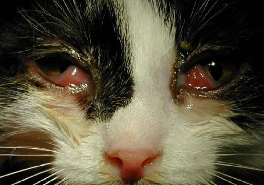 признаки заболенвания у кошки